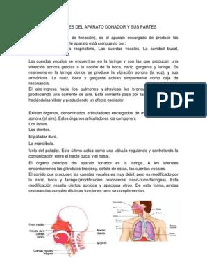 Partes de la garganta y sus funciones