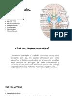 Equipo 1 Nervios Craneales PDF