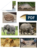 Animales Co Caparason