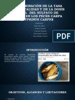 Exposicion Sulfato de Cobre (1)