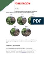 Qué Es La Deforestación