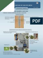 Post cosecha de la uva manejo - pdf.pdf
