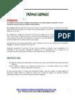Enzimas Cardiacas Ck Ckmb Tgo(ASP) Ldh