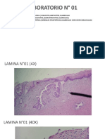 Laminas Patología .