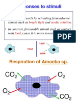 Responses to Stimuli of Amoeba
