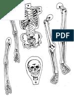 esqueleto LAMINA antonimos sinonimos.docx