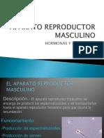 Aparato Reproductor Masculino.ppt