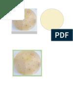 Fotos Microbiología