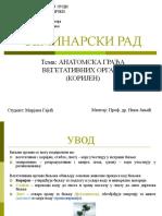 anatomija, seminarski (1) korijen.. Mirjana Gajic.ppt