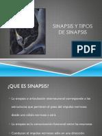 Sinapsis y tipos de sinapsis.pptx