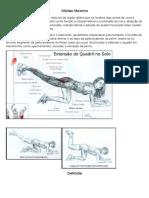 O Músculo Glúteo Máximo é Um Músculo Da Região Glútea