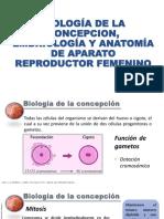 Biología de La Concepcion, Embriología y Anatomía de Aparato Reproductor Femenino