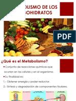 METABOLISMO DE LOS HC_Diapositivas