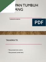 2.Tahapan TK