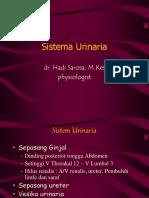 1. Fisiologi Sistem Urogenital (Dr. Hadi)