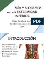 anatomia y bloqueos de miembro inferior