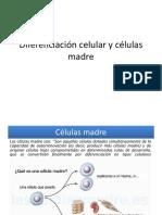 Diferenciación Celular y Células Madre (1)