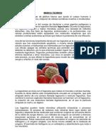 MARCO TEORICO FAGOCITOS.docx
