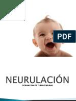 Embiologia Tubo Neural