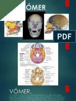 Exposicion Anatomia[1]
