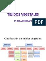 clasificacin detejido svegetales