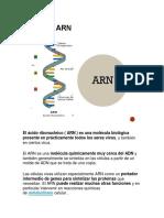 Qué es el ARN