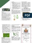 Briofitas y Perodifitas