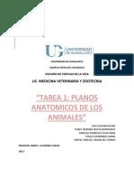 Planos Anatomicos Tarea 1