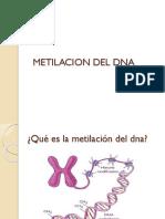 Metilacion Del Dna Epigenetica