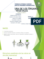 Estructura de Los Órganos Vegetales