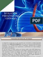 Aparato digestivo degloción1