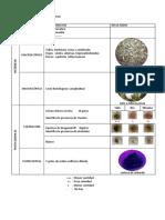 protocolo  y esquema.docx