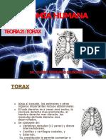 21-TORAX (1)