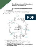 Ciclo de Krebbs PDF