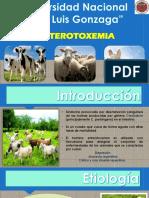 ENTERETOXEMIA ORIGINMAL