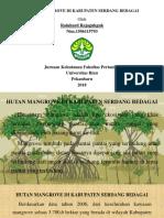 Hutan Mangrove Di Kabupaten Serdang Bedagai- Mantur
