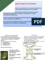 recombinacion genética 7-0.pptx