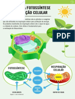 Produtos da fotossintese e respiração celular.pdf