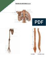 Prueba de Anatomia e