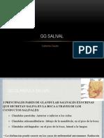 Gg Salival - Cath