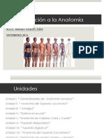 Anatomia Ulare 01 2016