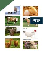 Animales de La Granja en Ingles y Español