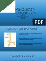 Bronquios y Bronquiolos