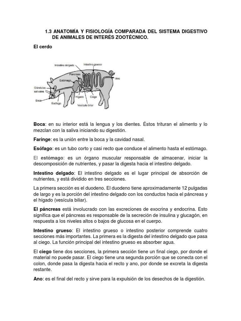 Vistoso Anatomía Externa Cerdo Elaboración - Anatomía de Las ...