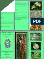 Tricoto Plant Medi
