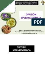 Clase Division Spermatophyta 2017