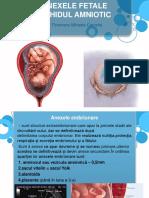 3.Anexele Fetale Si Lichidul Amniotic