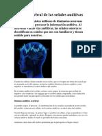 Proceso cerebral de las señales auditivas