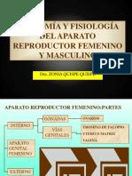 Aparato Reproductor f y m - Partes