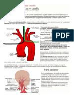Irrigación venosa y arterial del cuello, cara y cabeza